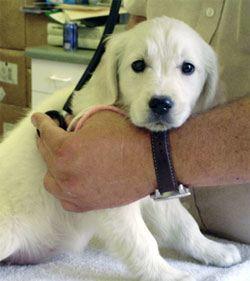 puppy medical check