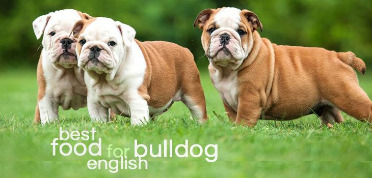 Best dog food for english bulldog