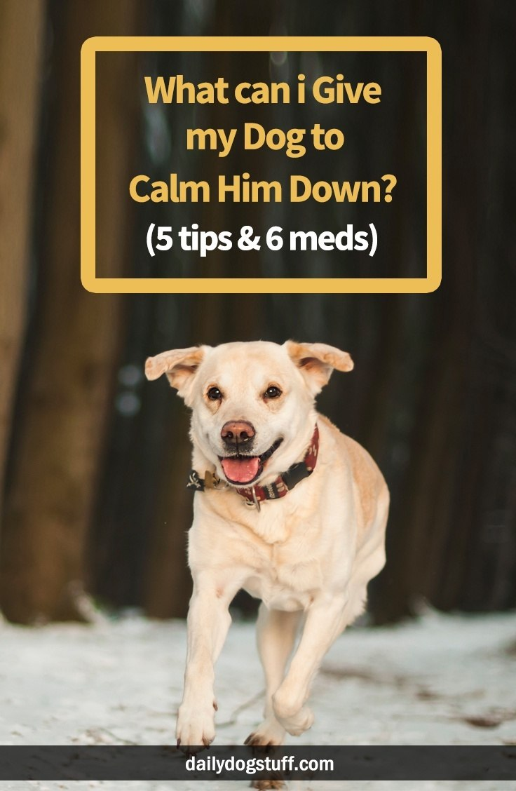 What Can I Give My Dog To Calm Him Down 5 Tips 6 Meds Daily