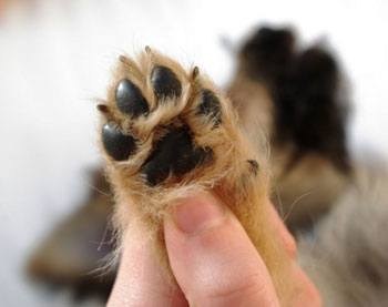 can you declaw a dog