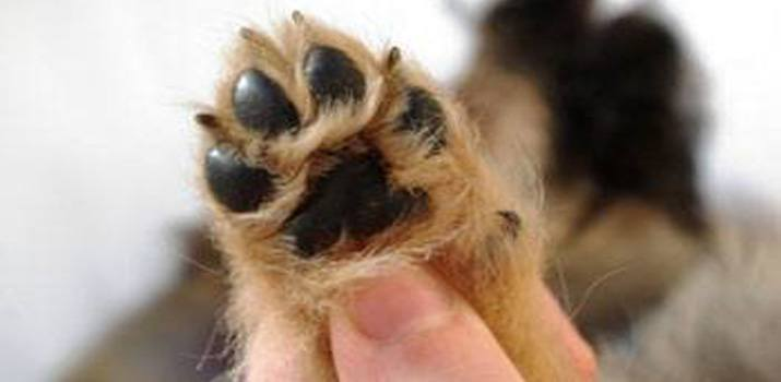 dog's paw whois claws may be declawed