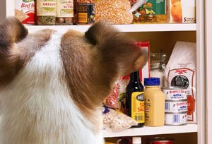 safe to eat spices for your dog