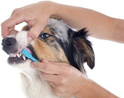 Dental issues in dogs