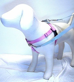 No Pull Dog Harness Which Is Best For Your Dog Daily