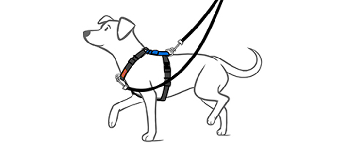 no pull dog harness  u2013 which is best for your dog