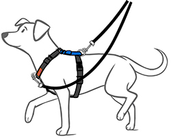 dog wearing no pull harness