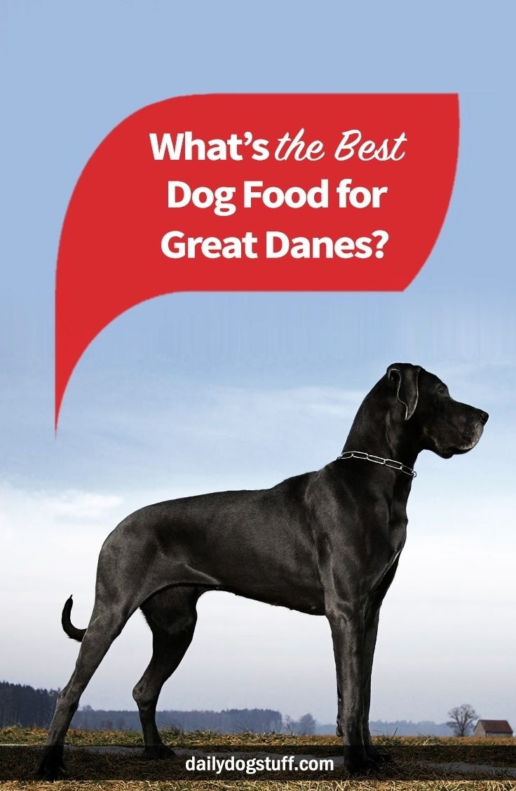 What's the Best Dog Food for Great Danes? | Daily Dog Stuff