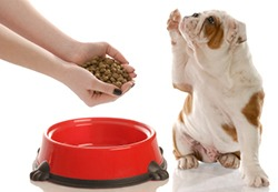 Pickiness in dog foods