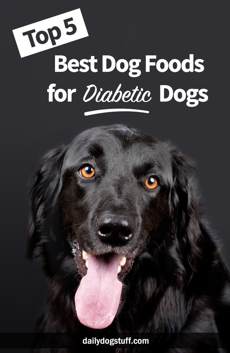 Top Dog Foods For Picky Eaters
