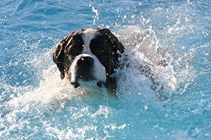 dog swimming in water