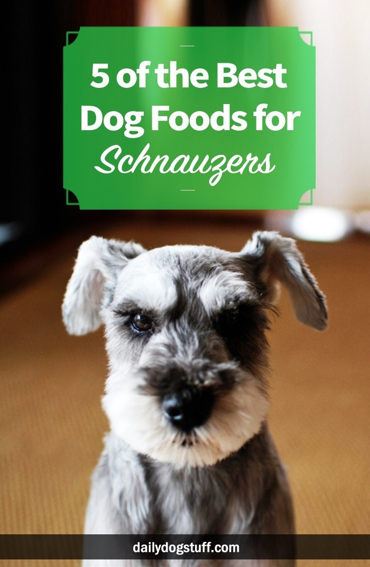 Best Dog Food For Schnauzers 5 Top Picks Daily Dog Stuff