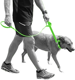 bright colored neon dog leash for better visibility on the road and outdoors