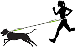 length of dog leash while running
