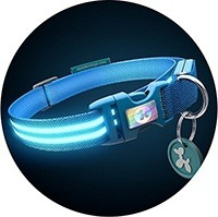 Authentic Squeaker LED Dog Collar - USB Rechargeable - Available in 8 Colors & 4 Sizes