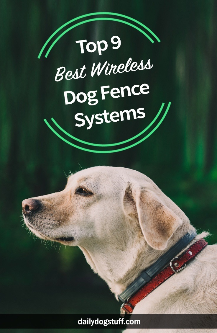 Top 9 Best Wireless Dog Fence Systems Electric