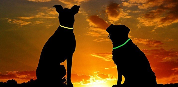 best glow in the dark dog collars