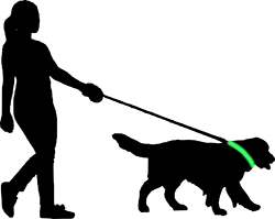 walking the dog with a glow in the dark collar around her neck
