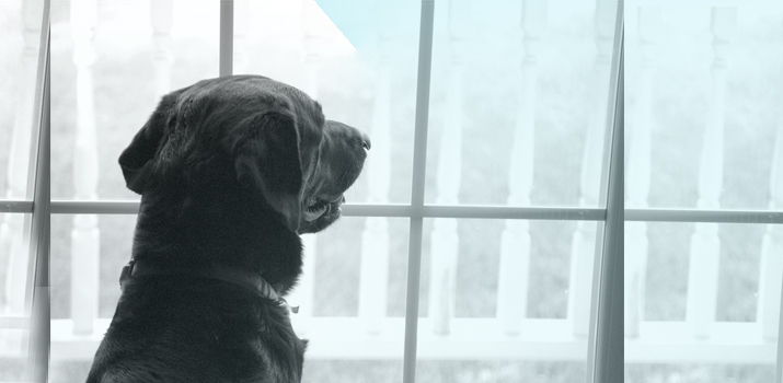 Signs of a dying dog staring out of window