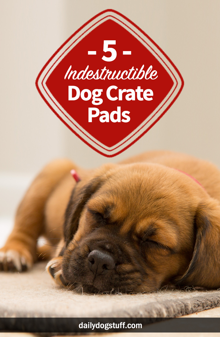 5 Best Indestructible Dog Crate Pads For Heavy Chewers Daily Dog Stuff