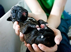 new born puppy weight at birth