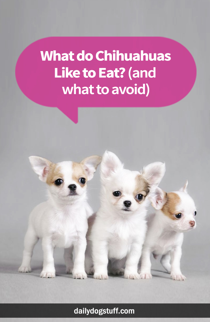 What Do Chihuahuas Like To Eat And What To Avoid