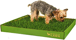 DoggieLawn Disposable Dog Potty - REAL Grass