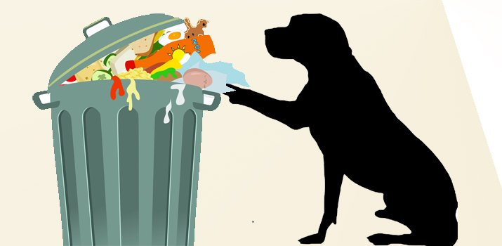 dog digging through the trash in a garbage can