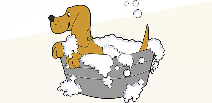 dog bathing in baby shampoo