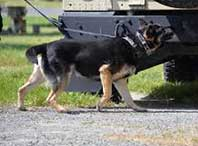 dog walking on a hard surface