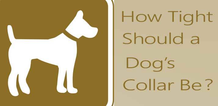 How Tight Should a Dog Collar Be to fit properly around a dogs neck