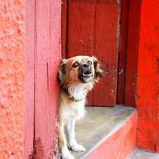 barking dog at hte house door