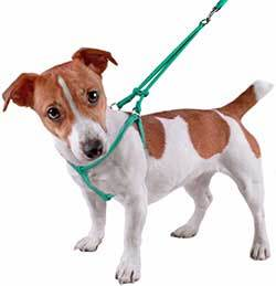 dog harness alternative if dog collar wont fit or is too tight for a dogs personality