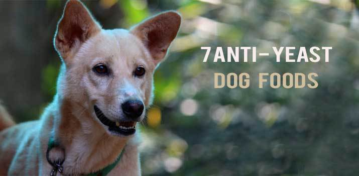 Anti Yeast dog foods