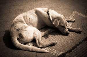 thin senior dog lying on the floor