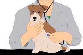 vet examines dog