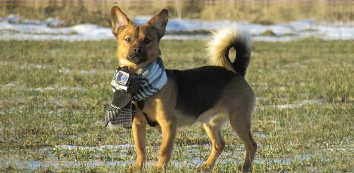 dog with a camera attached to his neck collar