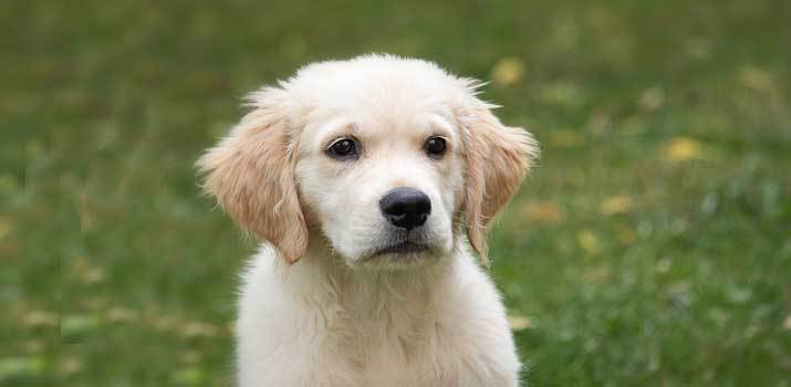 sighing dog