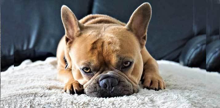 dog-digging-at-the-bed