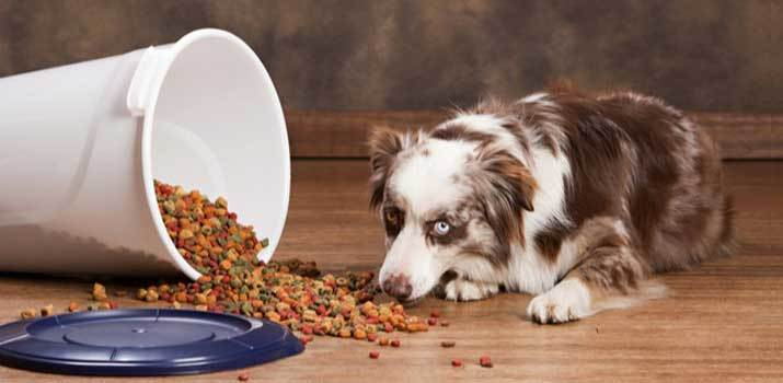 Dog eating food from a opened food container