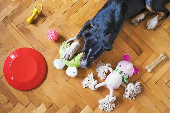dog playing with eco friendly dog toys