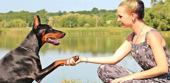 Dog putting his paw in a girls hand