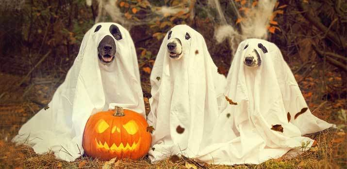 Dogs wearing spooky halloween costumes