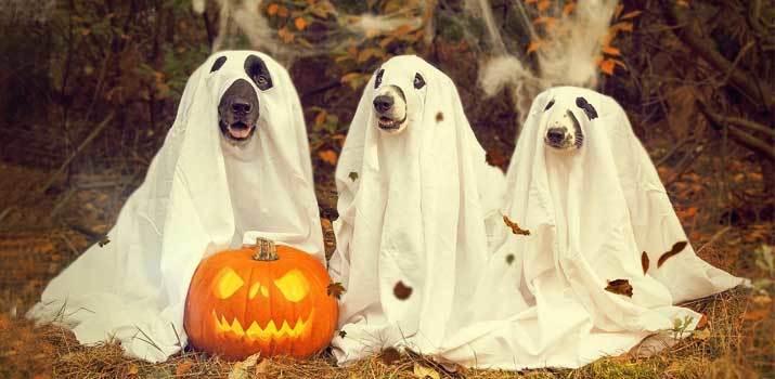 Dogs wearing spooky halloween costumes