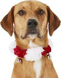 Frisco Jingle Bells Dog & Cat Holiday Collar with Bells