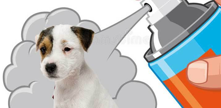 spraying a smelly dog with dog cologne