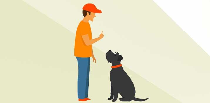 No shock dog collar training