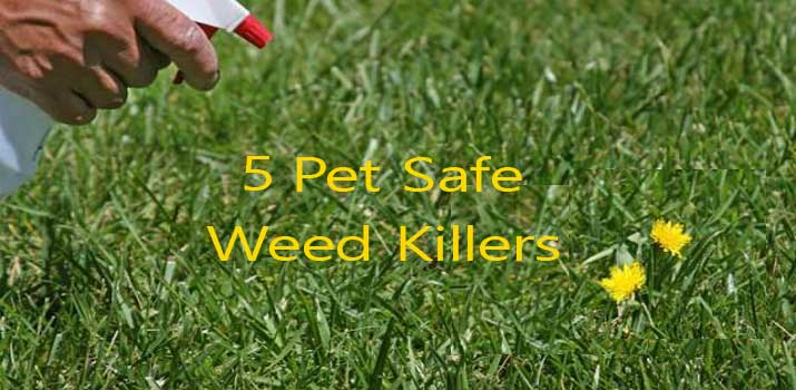 best pet safe weed killers