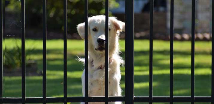 Dog behind an outdoor door gate