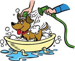 washing a dog in a human bath tub can get messy